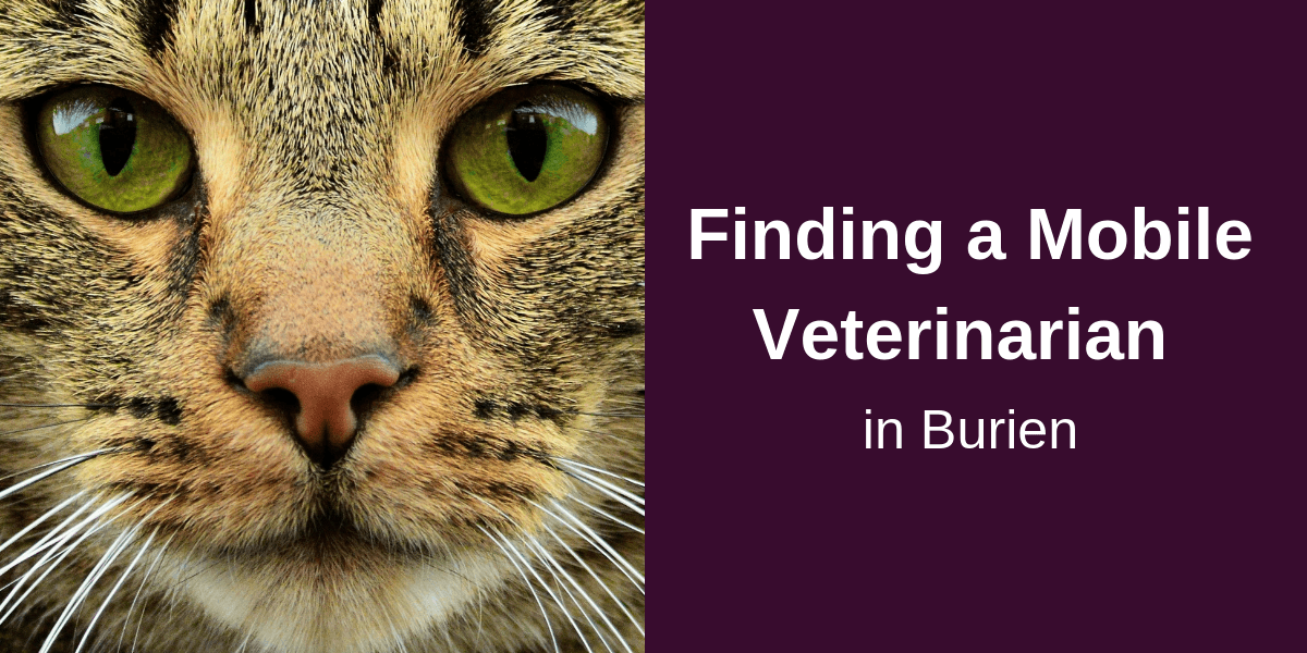 Finding a Mobile Veterinarian in Burien