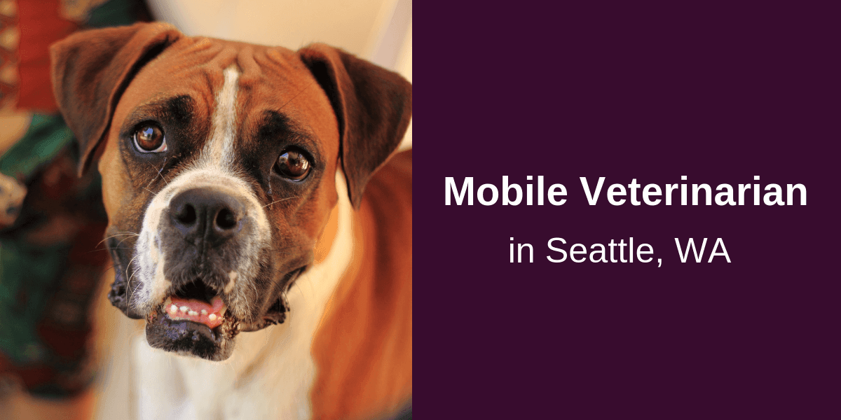 Mobile-Veterinarian-in-Seattle-WA